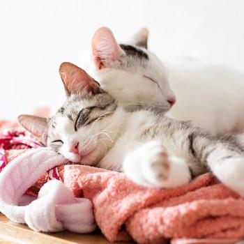 cats sleeping on laundry