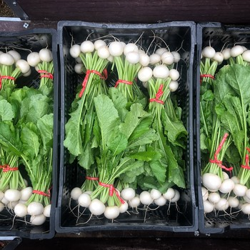 bundles of hakurei turnips in crates