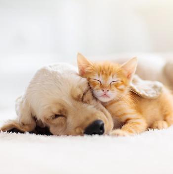 sleeping kitty and dog