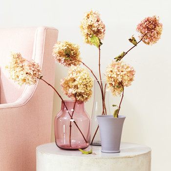Six Flowers That Will Dry Beautifully