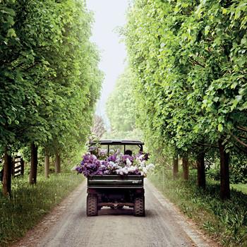 marthas flower lilac truck