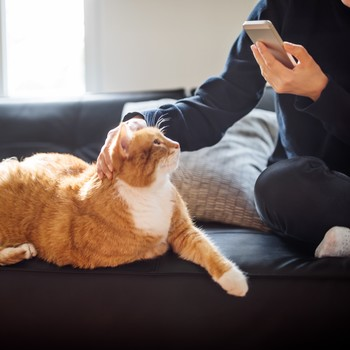person holding phone and facing cat