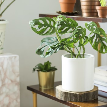 Unique, Beautiful Planters That Will Enhance the Look of Any Houseplant