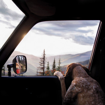 The Dog Can Come Too! 11 Pet-Friendly Vacation Ideas