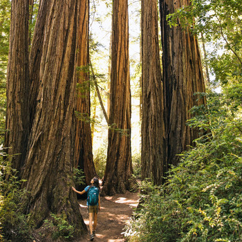 woman walking through red wood forest
