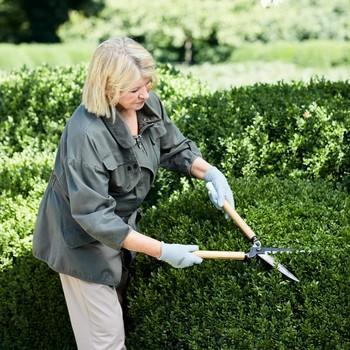 martha pruning shrubs