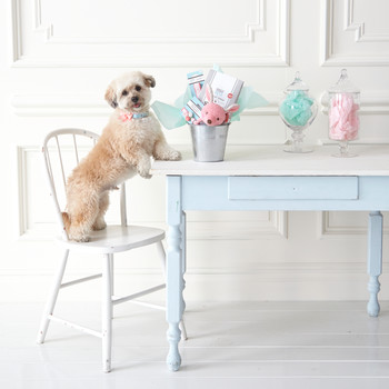How to Create the Perfect Easter Basket for Your Pet, Because Why Not?
