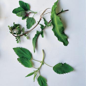 edible-weeds-body-soul-0509-a104309csa3S.jpg