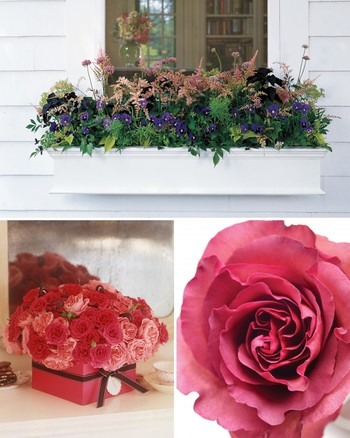 "Flower Arrangements from ""The Martha Stewart Show"""