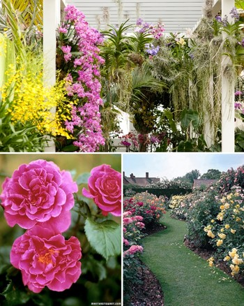 The Ultimate Rose Garden
