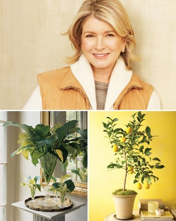 How to Grow Ferns at Home