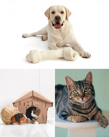 Catnip Tips and Treats for Cats