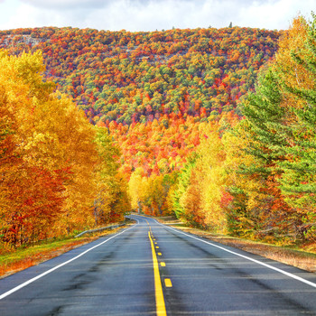 Find the Best Fall Foliage in Your Area Using This Interactive Map