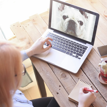 Woman looking at photo of dog on laptop