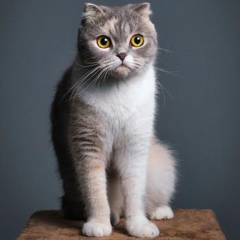 gray cat sitting on brown podium