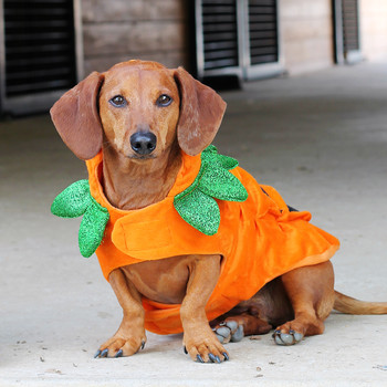 Dogs in Halloween Costumes: Can You Resist?