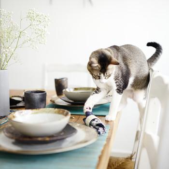 cat knocking napkin off table