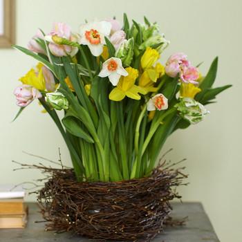 观察:桦木,包裹着郁金香和水仙篮