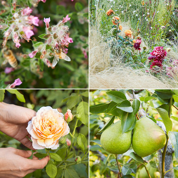pink and orange wildflowers bees fruit