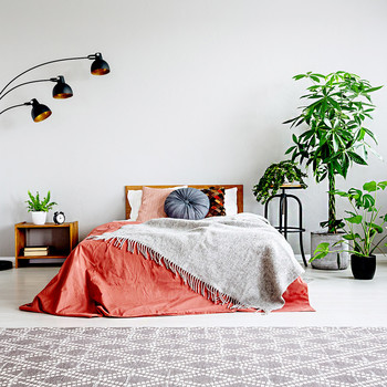 bedroom with salmon and gray blankets, plants