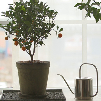 Watch: How to Grow Citrus Indoors Video
