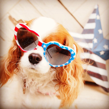 Martha Stewart Fans' Most #PatrioticPets