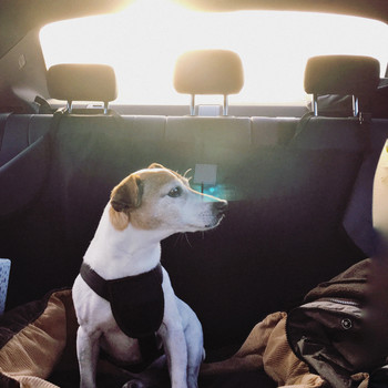 5 Tips for Bringing Your Dog on a Road Trip