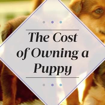 The Cost of Owning a Puppy
