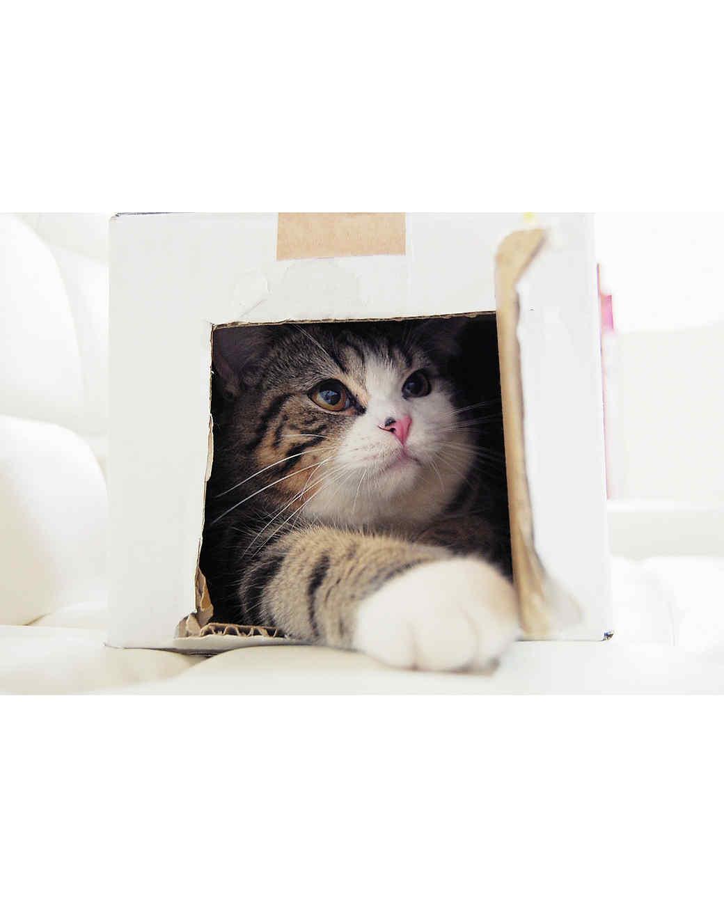 maru-cat-1.jpg
