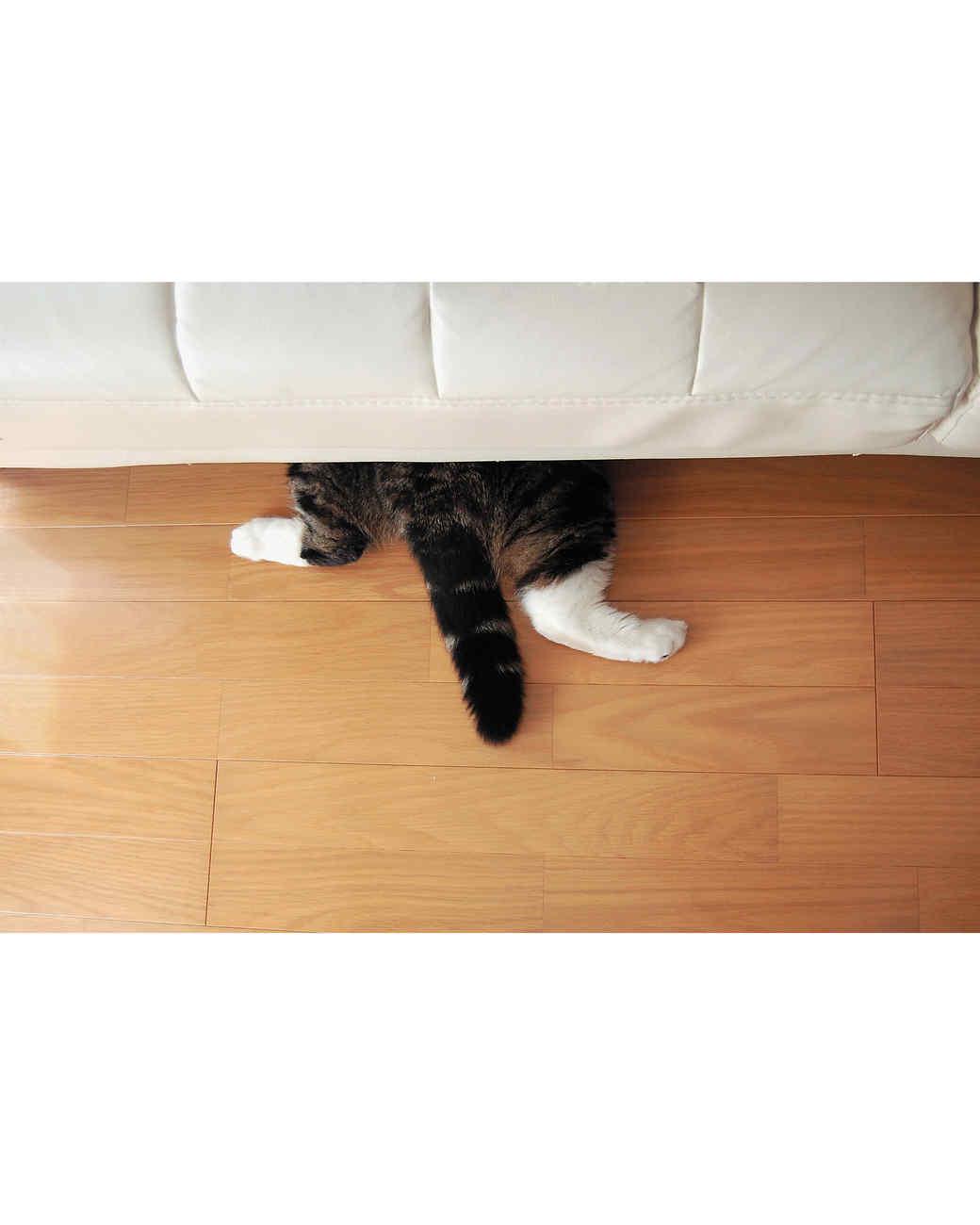 maru-cat-2.jpg
