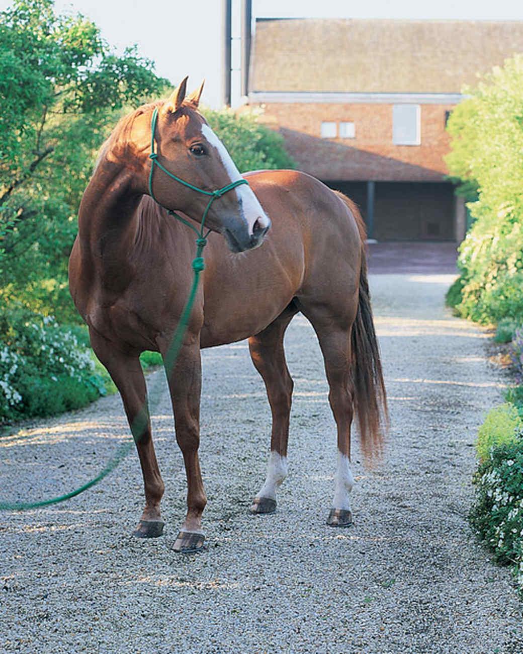 ml208c6_horse.jpg