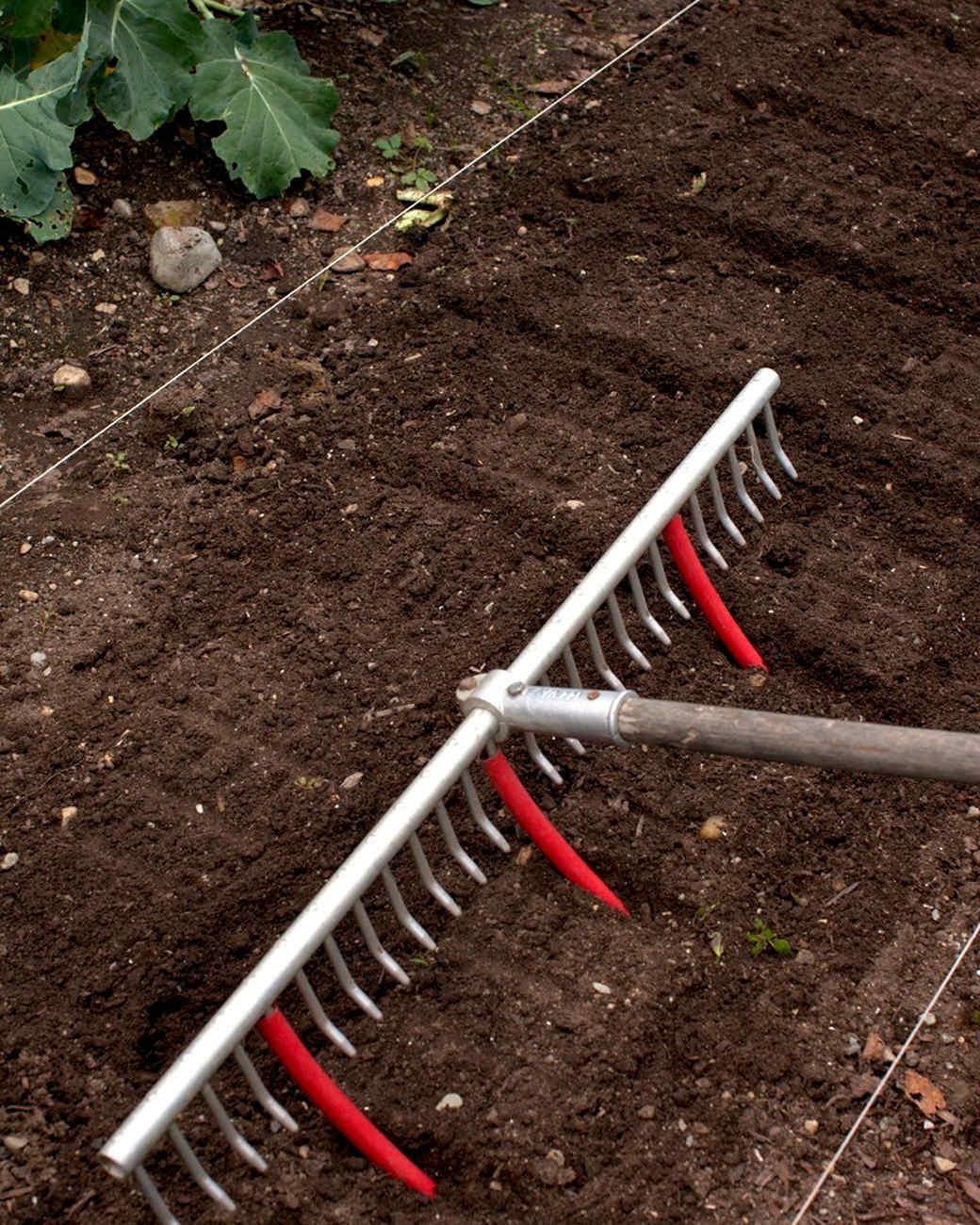plantingrows5.jpg