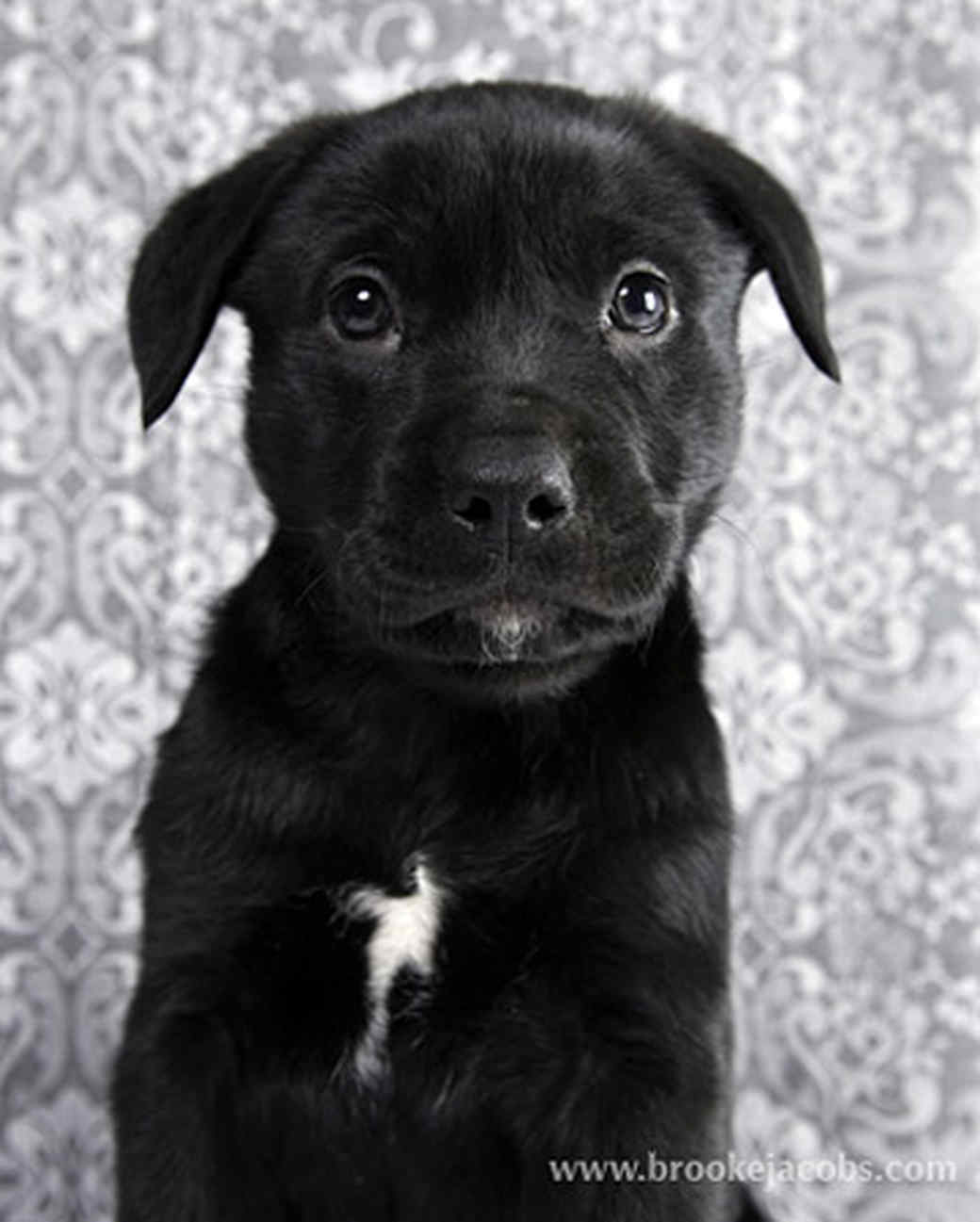 pets_puppies_1.jpg