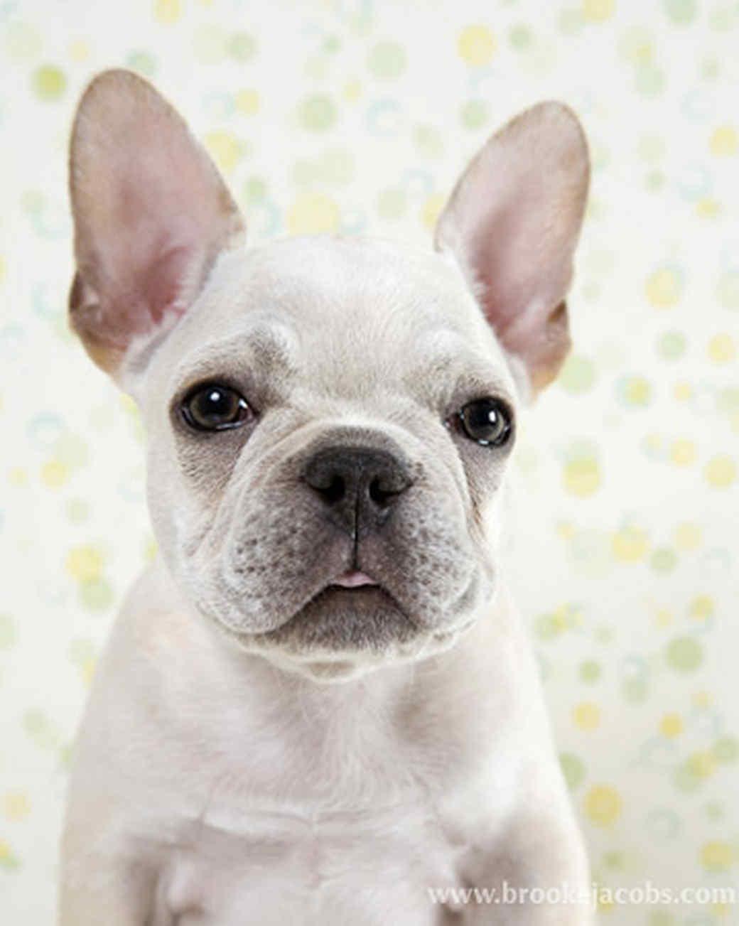 pets_puppies_2.jpg