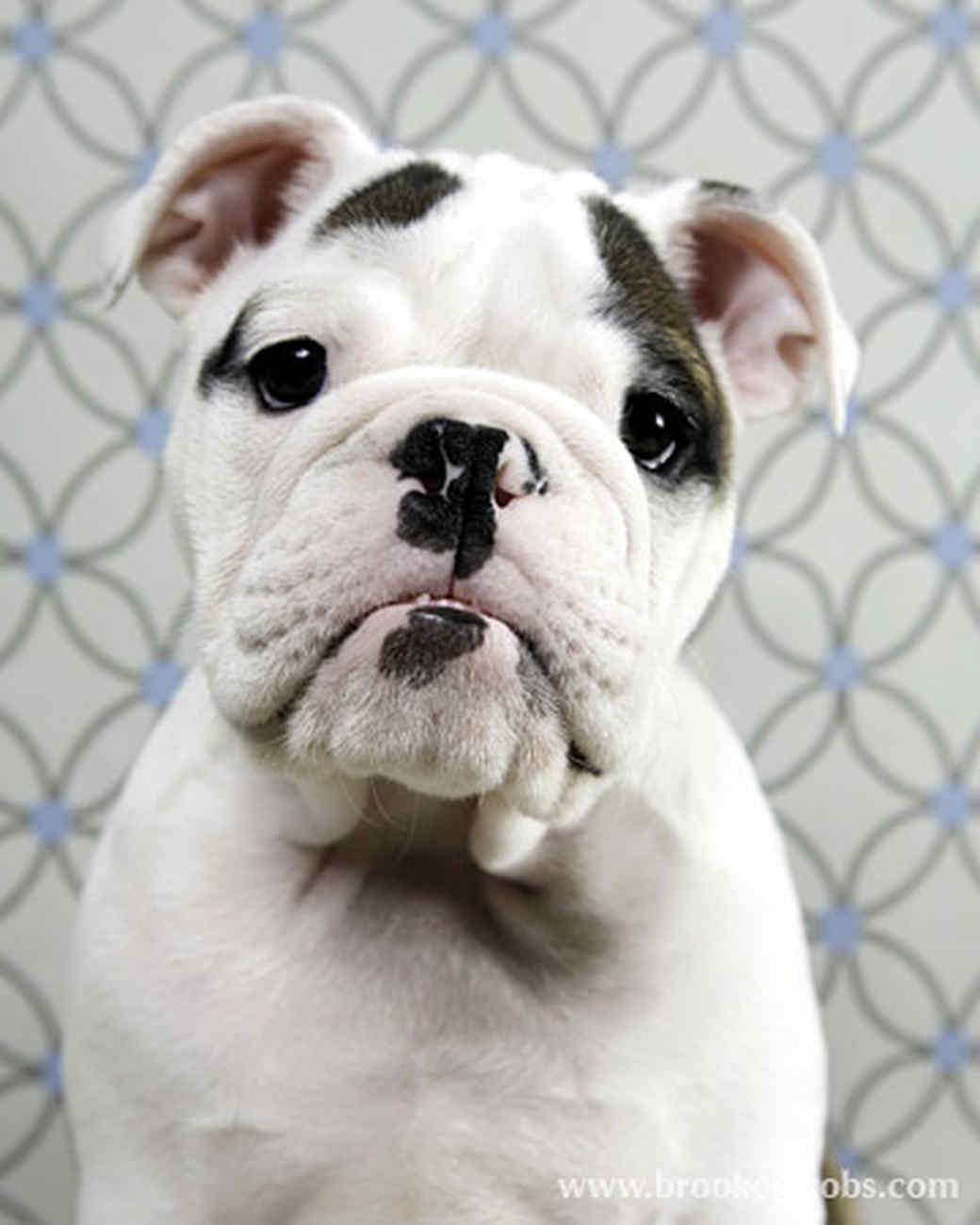 pets_puppies_5.jpg