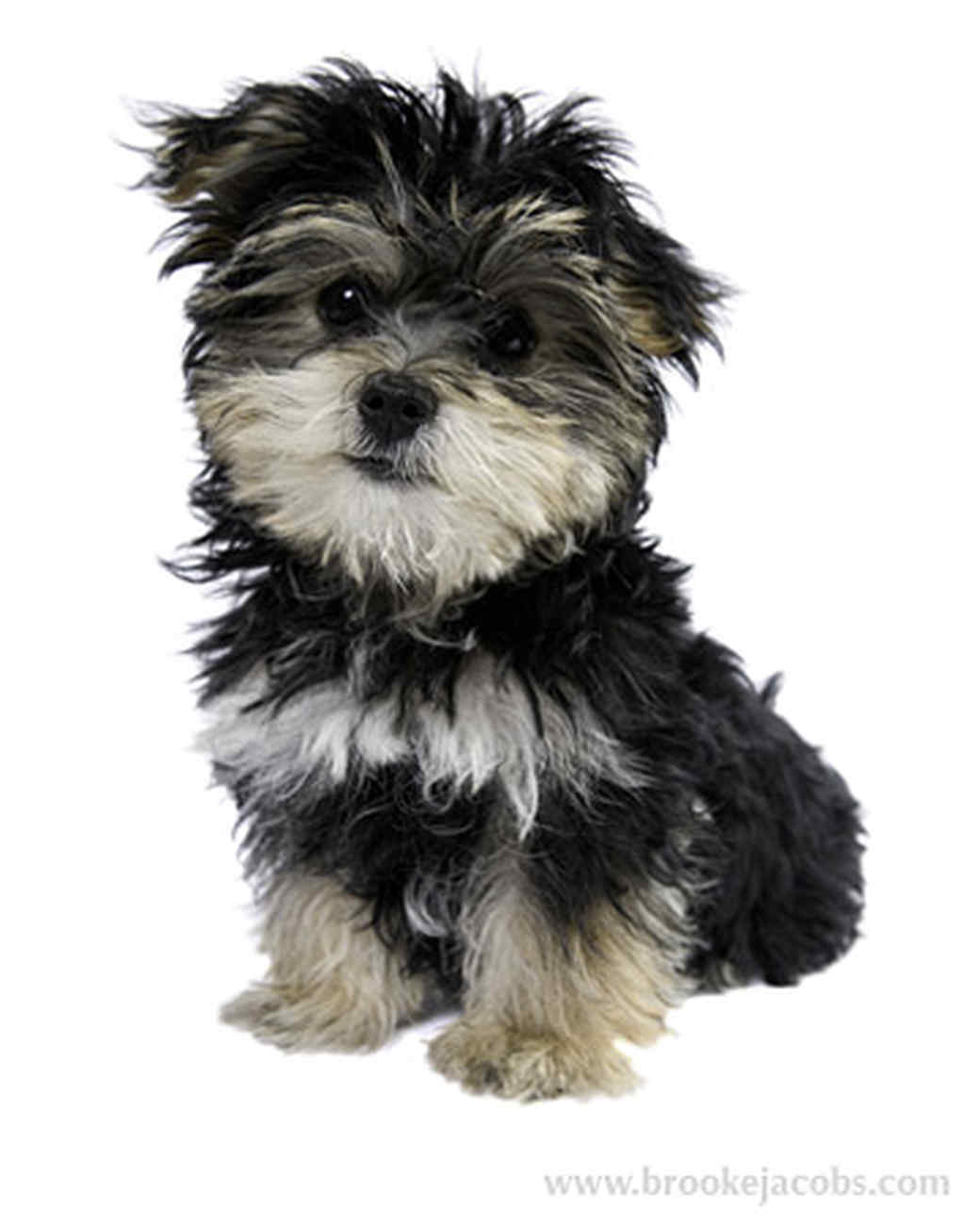 pets_puppies_9.jpg