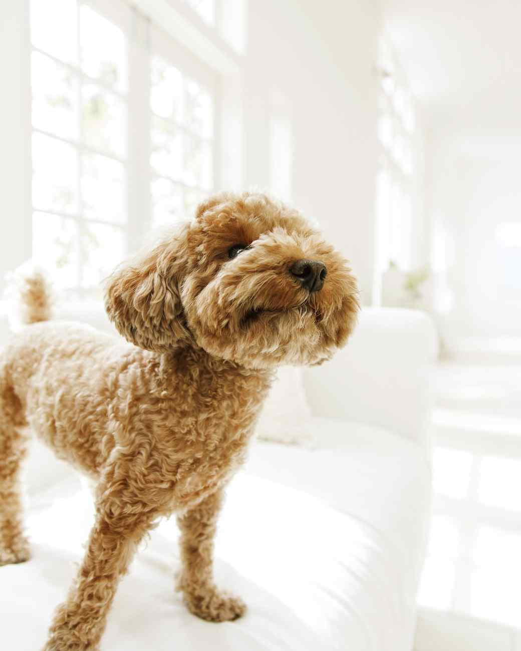 Clean House Tips For Pet Owners Martha Stewart