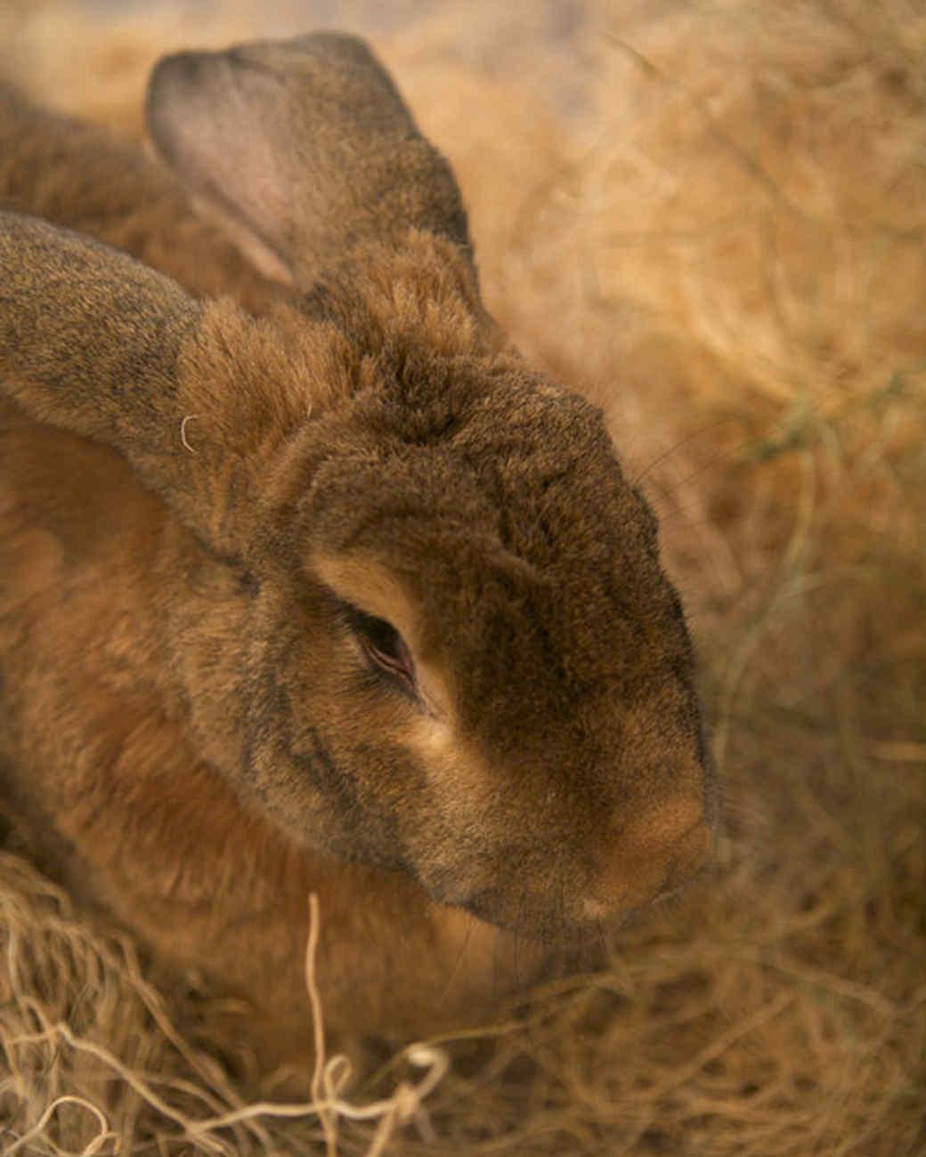 m4126_bunnies23.jpg