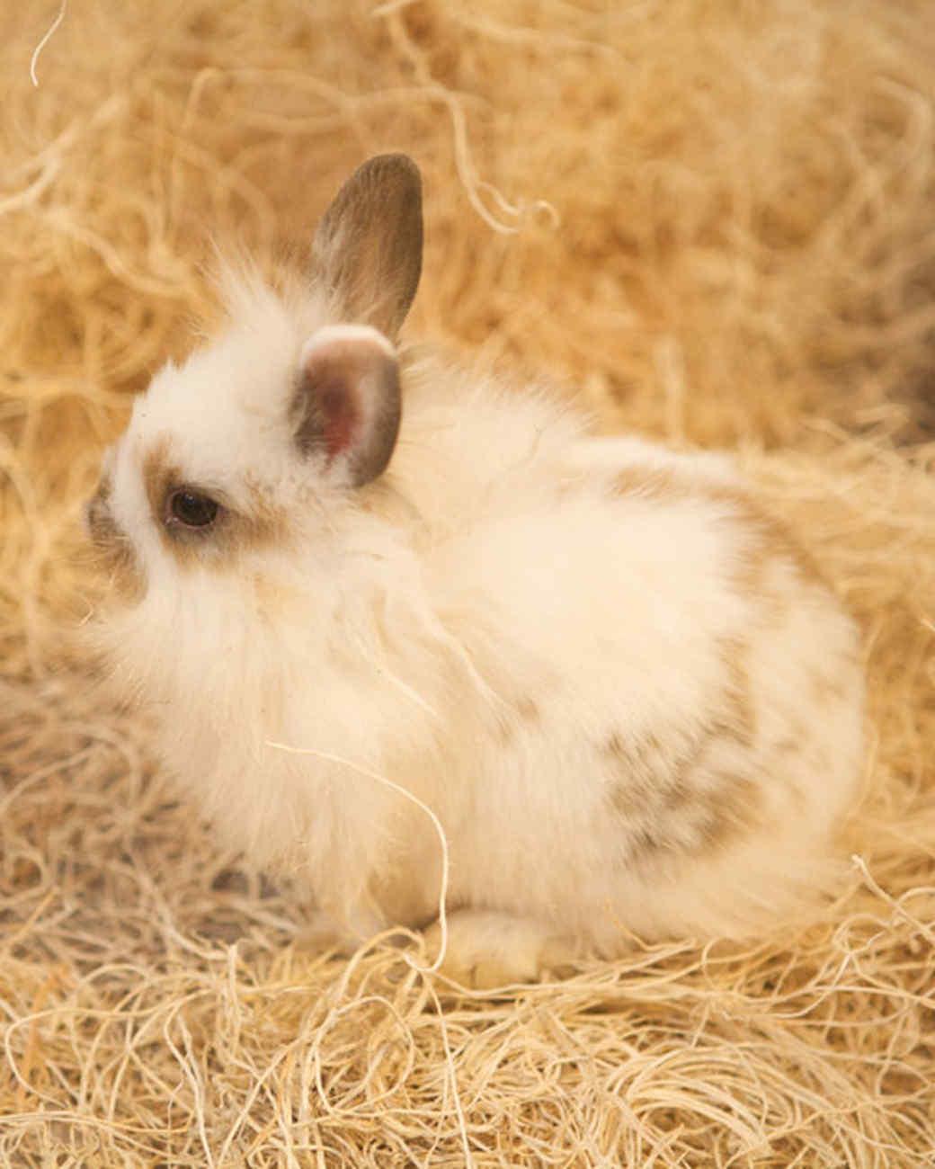 m4126_bunnies35.jpg