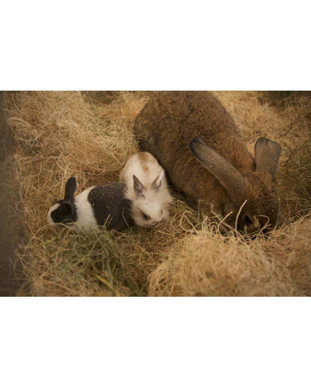 m4126_bunnies43.jpg
