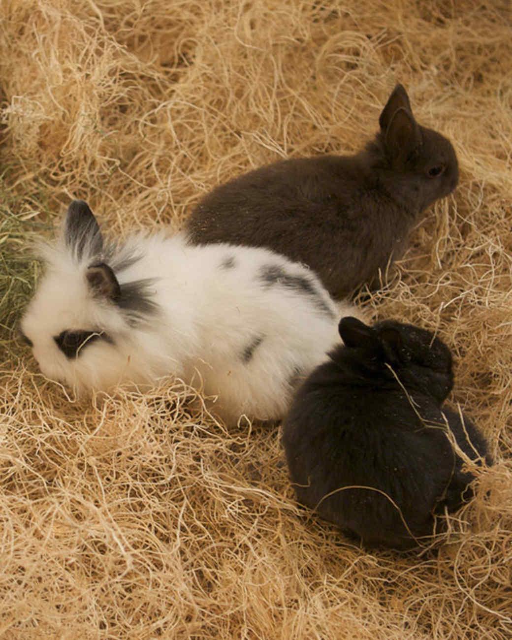 m4126_bunnies53.jpg