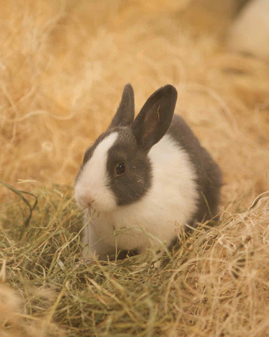 m4126_bunnies82.jpg