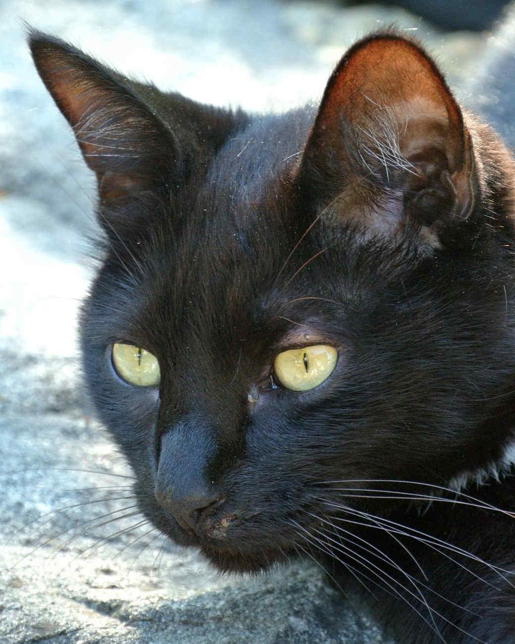 marthas-cats-30.jpg
