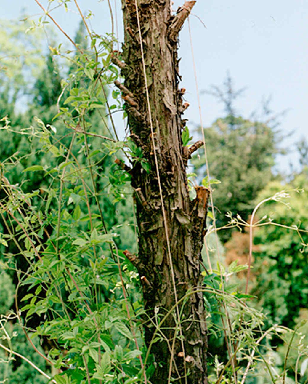 stake-tree-1115.jpg