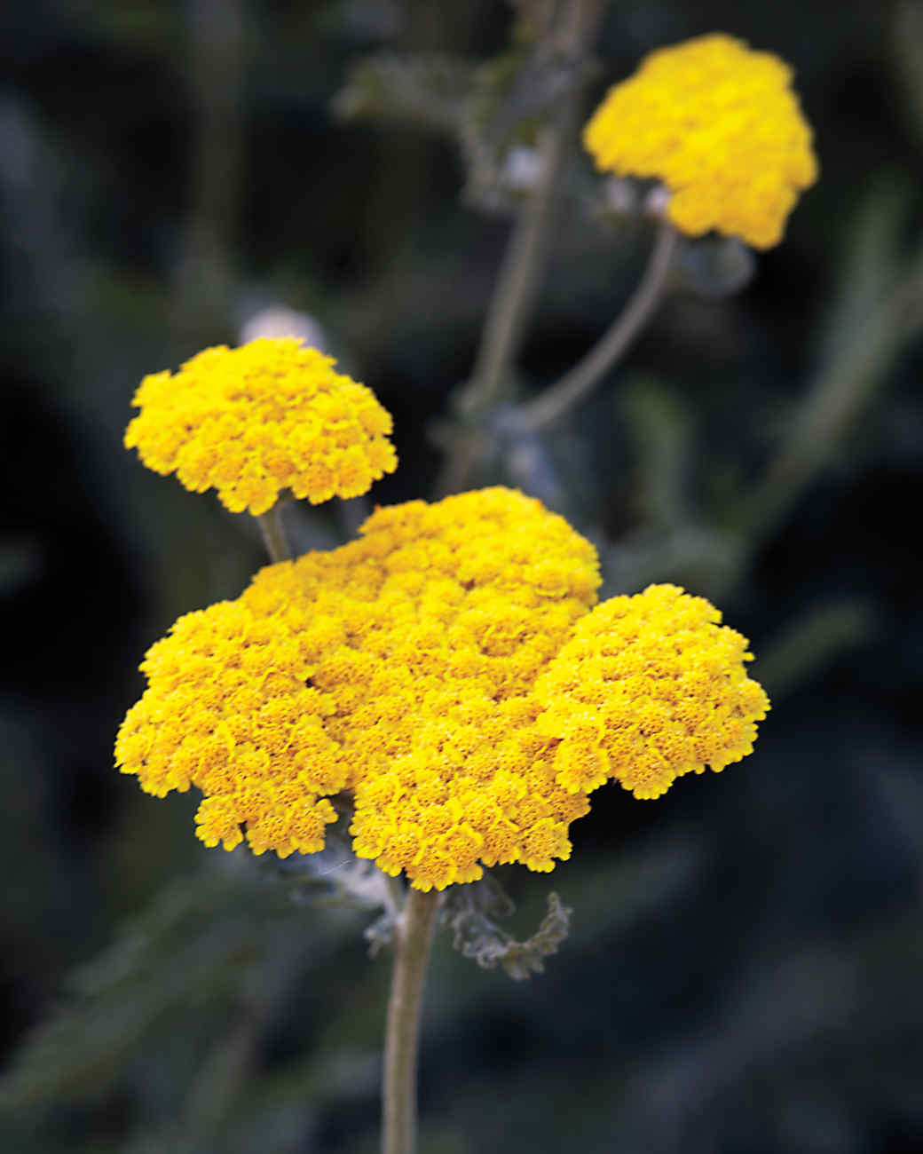 yellow-md110341.jpg