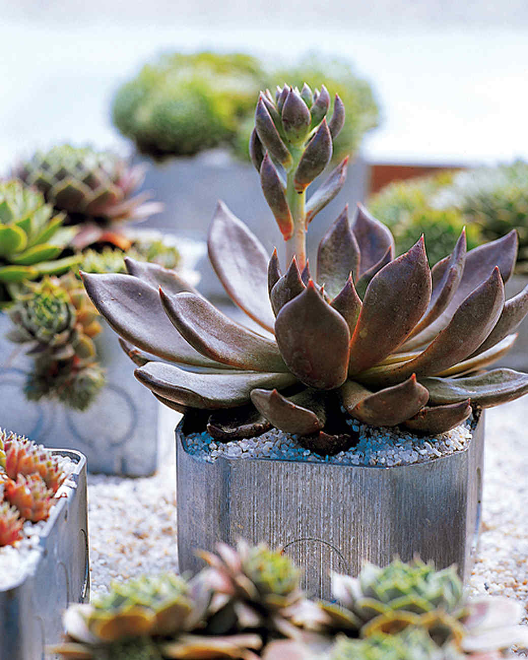 container garden ideas for any household martha stewart - Garden Ideas Using Pots