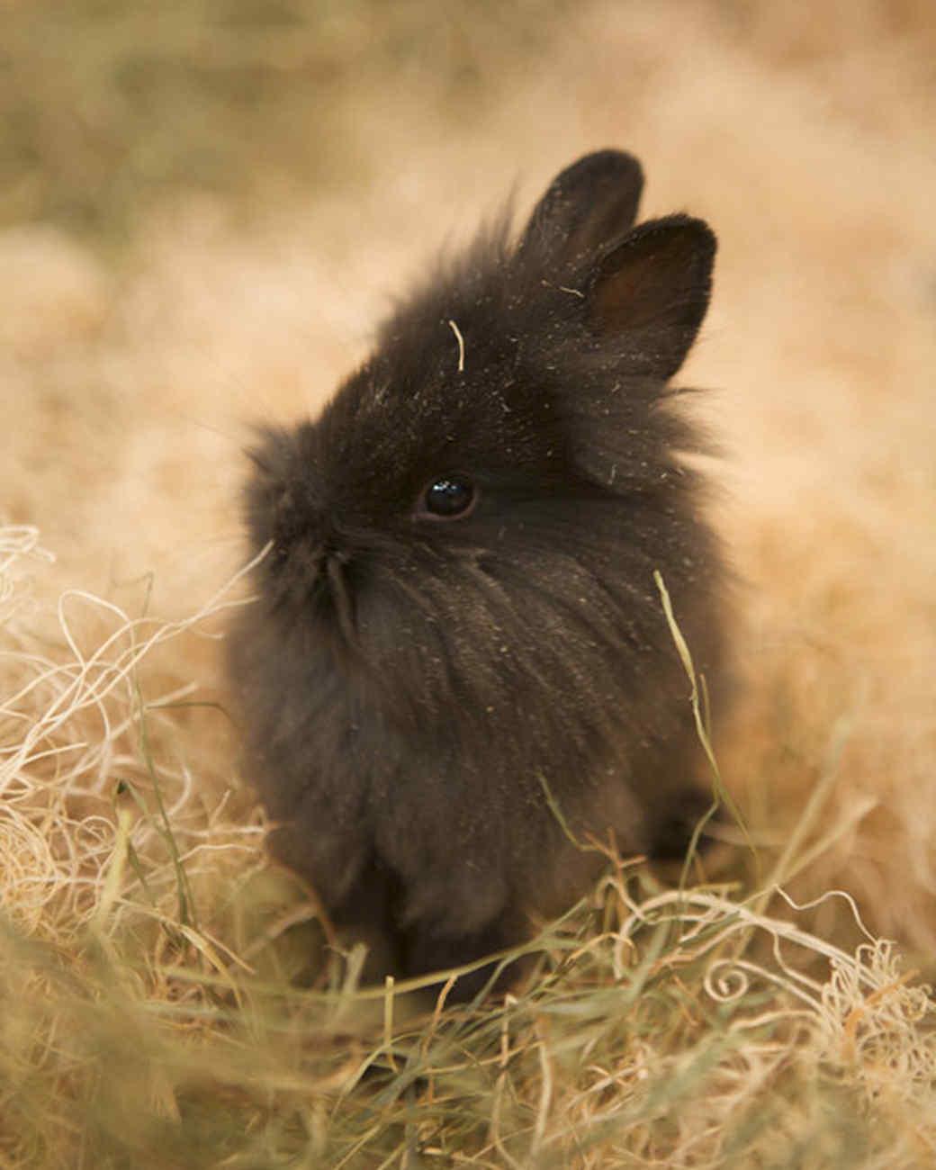 m4126_bunnies121.jpg