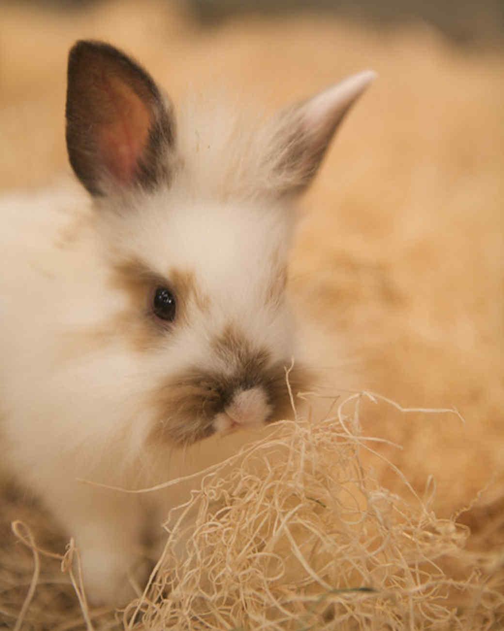 m4126_bunnies124.jpg