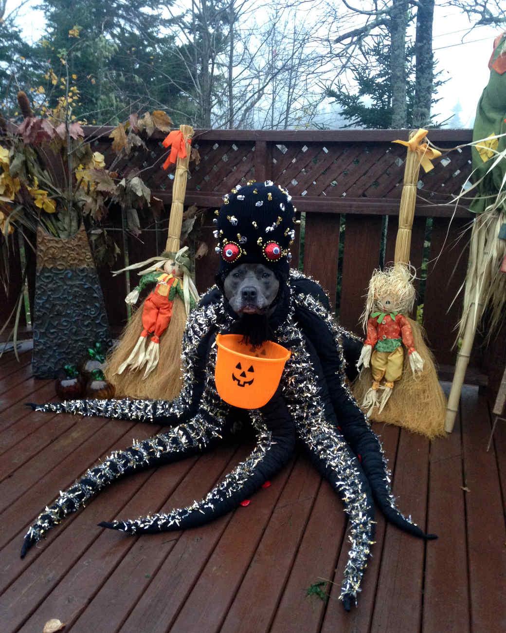 octopus-dog-1014.jpg