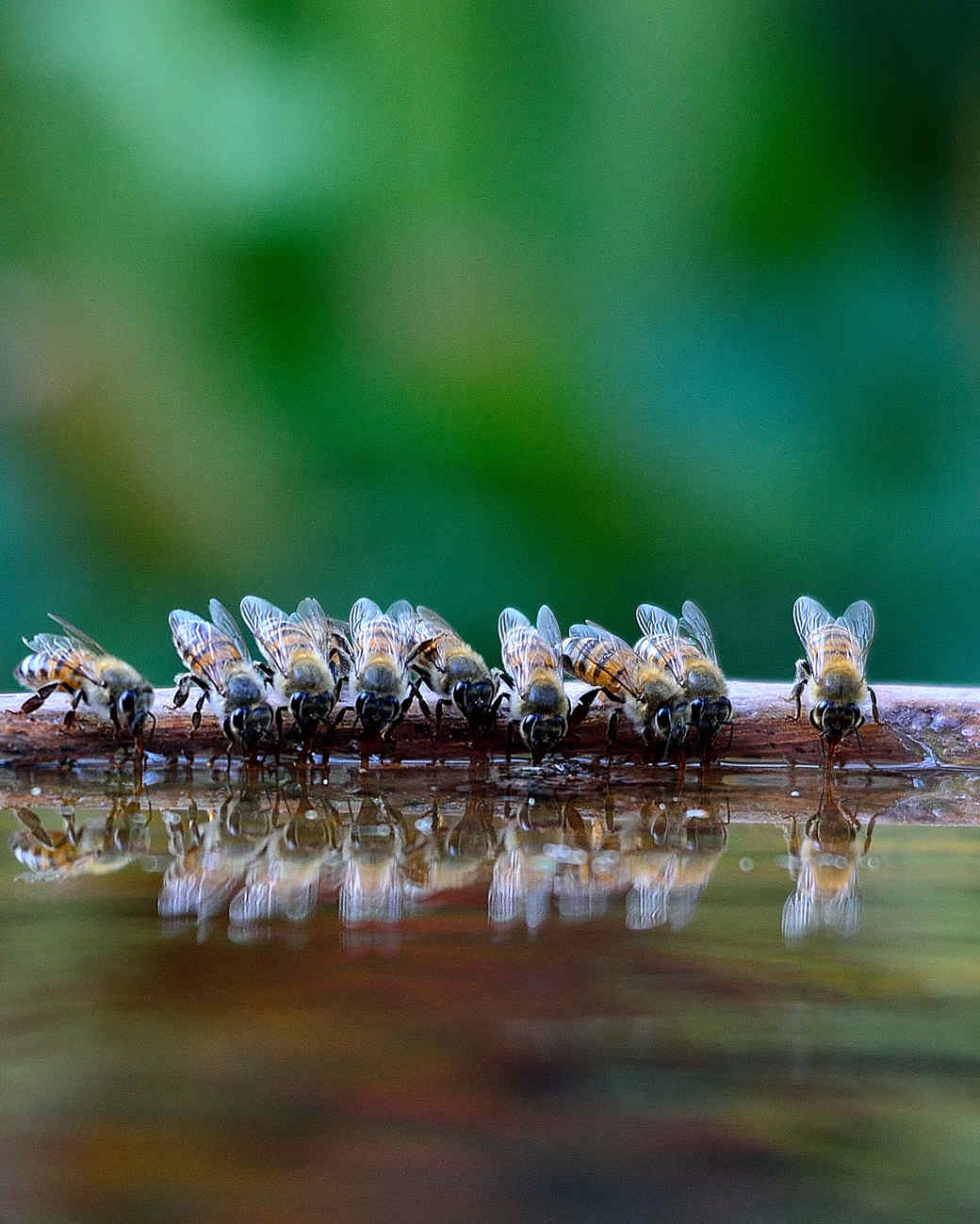 bees drinking from shallow water area